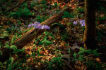 Purple Forest Flowers thumbnail