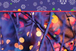 Holiday Lights thumbnail