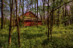 Barn in Forest thumbnail