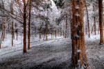 Frosted Forest thumbnail