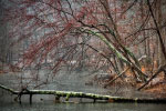 Winter River thumbnail
